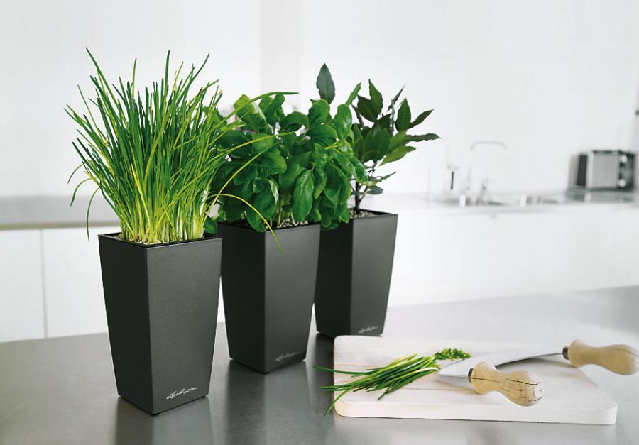 Стильные комнатные растения